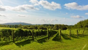 57-Vines-and-view-to-South-Downs-1.jpg